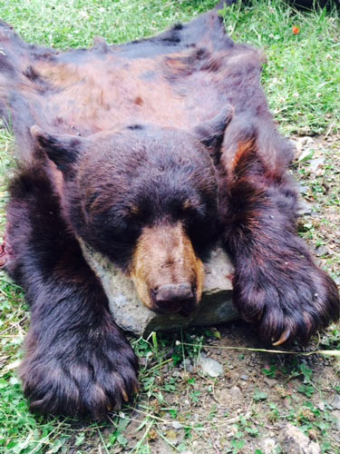 black bear hunts in New Mexico